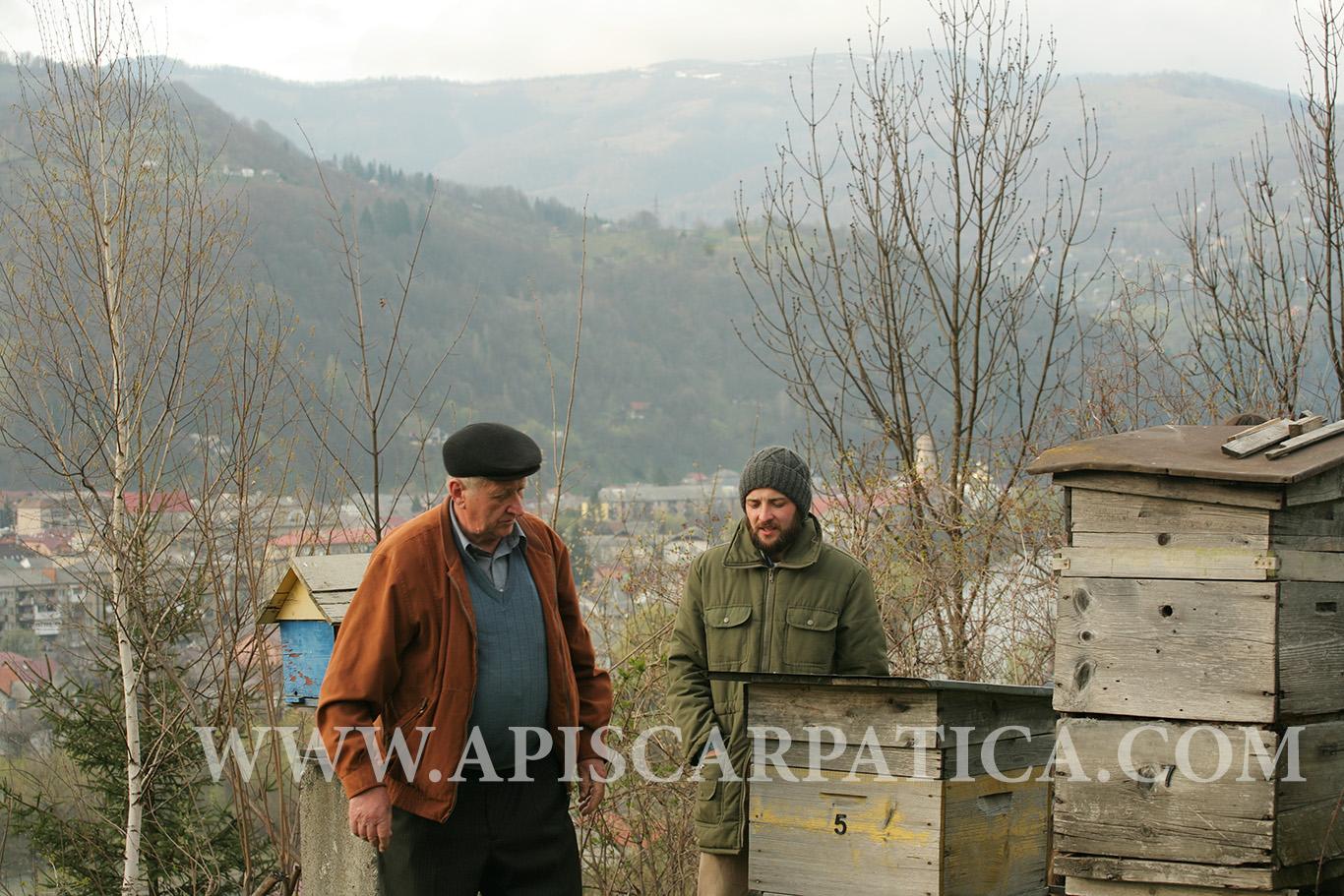 рання весна на вискокогірній пасіці рахівського типу карпатських бджіл